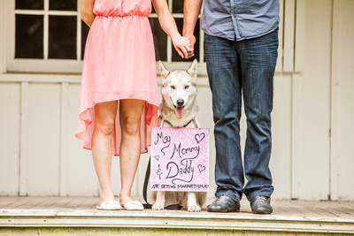 Bride, Candid, dog, engagement poses, engagement photography, engagement photos, engagement poses, georgetown engagement photos, husky, toronto wedding photographer, toronto wedding photography, toronto weddings, vintage engagement photos, Wedding Party